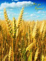 """Зошит А4. Серія """"Мій дім"""". Пшеничне поле"""