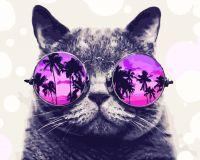 """Картина по номерам """"Котик на Майями"""""""